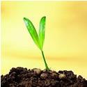 Seeds Catalog